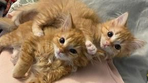 The story of Francis and Johnny, so two sister cats find a happy place to live