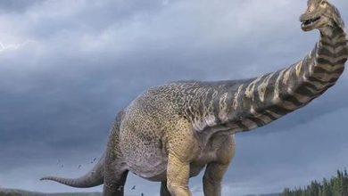 Photo of The largest dinosaur was found in Australia, it was 30 meters long – Corriere.it