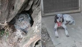 Sardinia fires: 30 dogs rescued in Cabras, two of whom survived hiding in a tree.  28 cats died in a private shelter