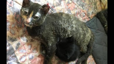 Photo of The story of Minka, the cat mother who jumped into the flames of fire to save her kittens