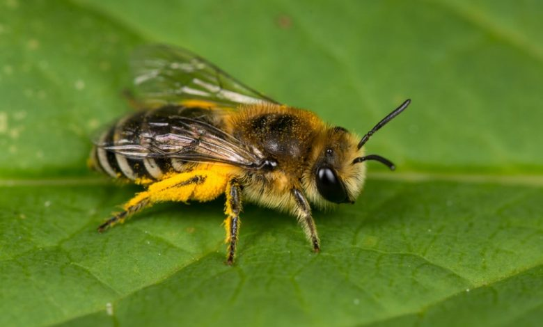 Between the United States and Mexico, one of the richest places in bees