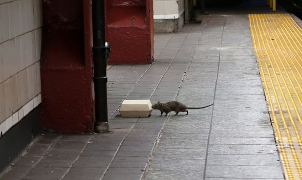 Weather creates a perfect storm for mice