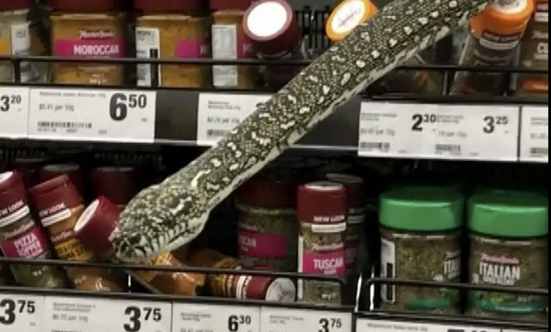 Australia, a three-meter snake emerges from a spice rack in a Sydney supermarket