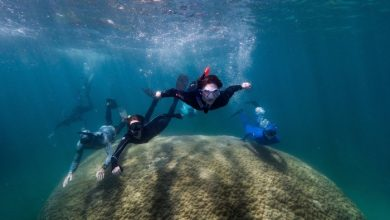 Photo of Giant coral discovered 10 meters high, more than 400 years old – News