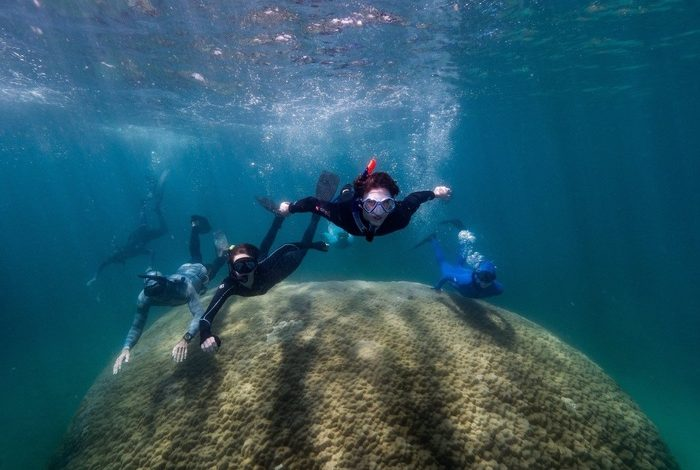 Giant coral discovered 10 meters high, more than 400 years old - News