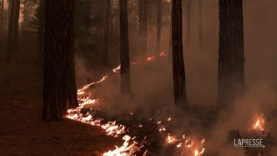 Photo of California burns governor of the area devastated by the Dixie fire