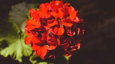 Photo of Here's what to plant in September to have a balcony and flower garden in the fall
