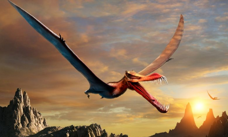 """Remains of a """"flying dragon"""" discovered in Australia"""