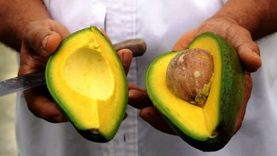 Photo of Scientists made 53 people eat an avocado every night, and here are the surprising effects