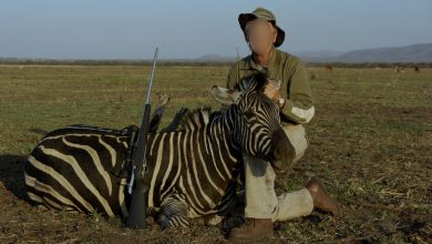 Photo of Animals, HSI launches a campaign against the import and export of hunting spoils