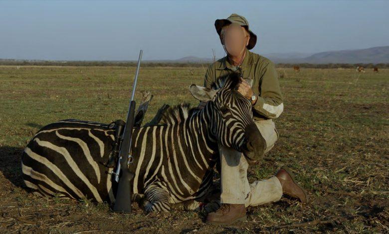 Hsi zebra