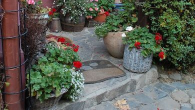 Photo of A wonderful autumn plant to discover to make balconies and gardens full of flowers