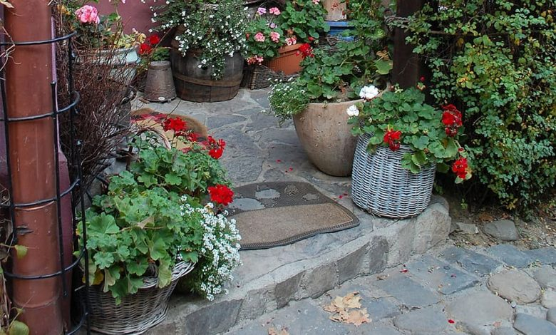A wonderful autumn plant to discover to make balconies and gardens full of flowers