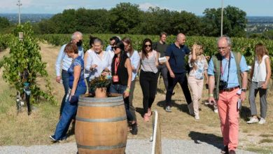 Photo of International journalists discover Romanian wine: meetings in Rimini, Forli and Faenza