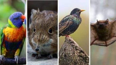 Photo of So the increase in temperatures changes the shape and size of many species – Corriere.it