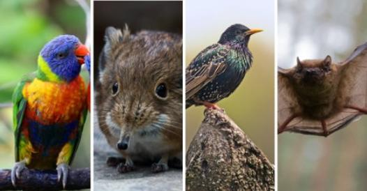 So the increase in temperatures changes the shape and size of many species - Corriere.it