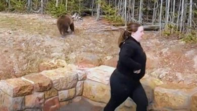 Photo of Woman jailed for close encounter with grizzly bear in Yellowstone Park
