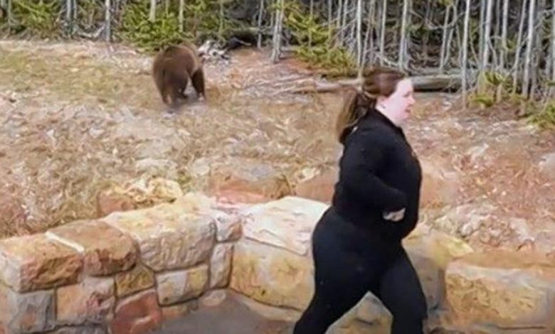 Woman jailed for close encounter with grizzly bear in Yellowstone Park