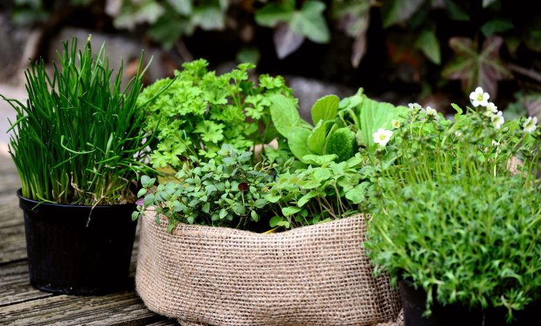 Here are 5 special aromatic plants for planting in the fall that will help fight cold diseases